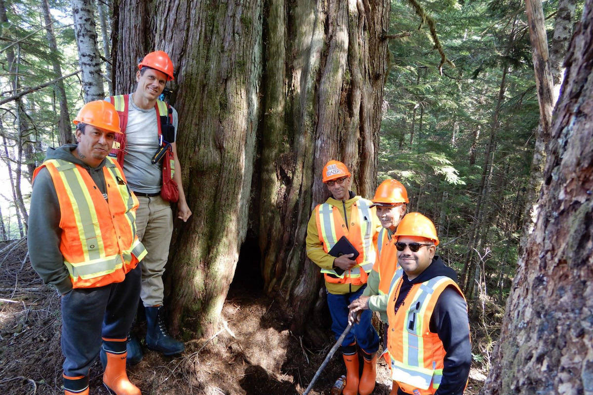 Forestry companies in B.C. agree to abide by the cedar protocols based on traditional laws of the First Nation members of the Nanwakolas Council. (Photo courtesy, Nanwakolas Council)